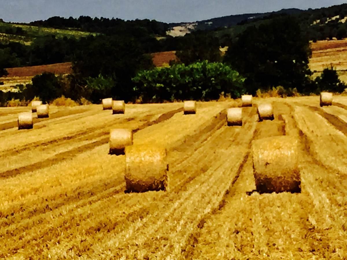 Agriturismo Maremma GR